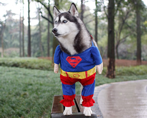 halloween-costumes-for-pets-25-1
